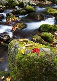 Fallen leaves and stream Stock Photography