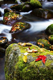 Fallen leaves and stream Royalty Free Stock Photos