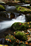 Fallen leaves and stream Stock Images
