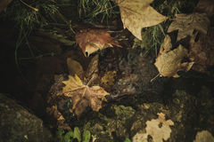 Fallen leaves in stream Stock Image