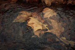 Fallen leaves in stream Royalty Free Stock Photos