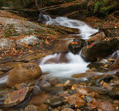 Fallen leaves and stream Stock Photos