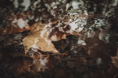 Fallen leaves in stream Stock Images