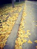 Fallen leaves on the streets stock photo