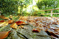 Fallen leaves and sun rays Stock Photography
