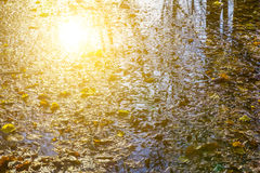 Fallen Leaves and Sun Reflection on Water Royalty Free Stock Photos