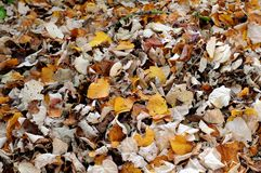 Swept foliage. Fallen leaves swept together on a heap Stock Images