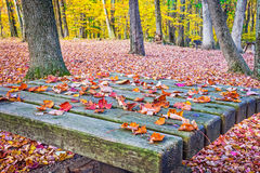 Fallen Leaves on Table Royalty Free Stock Images