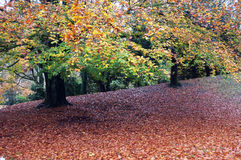 Fallen leaves and a tree Stock Images