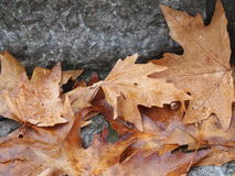 Fallen leaves stock photo