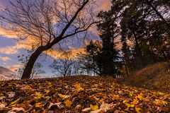 Fallen leaves and tree silhouette at sunset Stock Photos