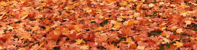 Fallen leaves of trees stock image