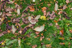 Autumn fallen leaves on the ground royalty free stock photos