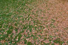 Autumn fallen leaves on the ground stock photography