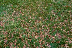 Autumn fallen leaves on the ground royalty free stock images
