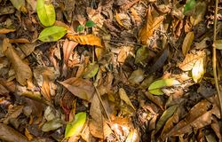 Fallen leaves in Tropical Jungle stock photography