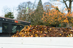 Fallen leaves on a truck Royalty Free Stock Photo