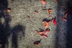 Fallen leaves under sunlight on concrete floor Royalty Free Stock Image