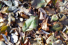 Fallen  leaves of various trees. Royalty Free Stock Photography