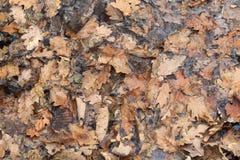 Fallen leaves in water. The detail of fallen leaves in water Royalty Free Stock Image