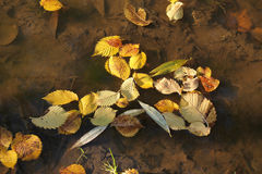 Fallen leaves in the water Stock Photo