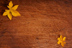 Fallen leaves on wood Royalty Free Stock Images