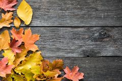 Fallen leaves on wooden background stock image
