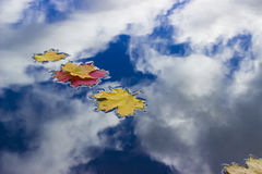 Fallen leaves. You thought looking up in the sky? No. It is an illusion. You look down at the water, which reflects clouds and sails fallen leaves Royalty Free Stock Image