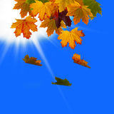 fallen leavessky Arkivfoto