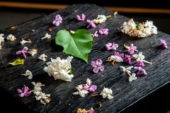 Fallen lilac flowers and leaf on the table stock image