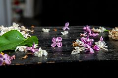Fallen lilac flowers and leaf on the table stock photos
