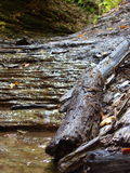 Fallen Limb. In prehistoric canyon bed Royalty Free Stock Images
