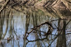 Fallen limb in spring stream. A fallen limb reflects in a small small stream in early spring.  Reflections and shadows of the limbs and tree as well as the royalty free stock photos