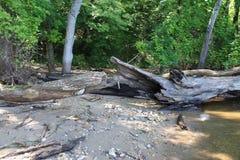 Fallen log. Lake Mississippi river beach sand Stock Photography