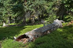 Fallen log in meadow Royalty Free Stock Photography