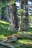 Fallen log in meadow Royalty Free Stock Image