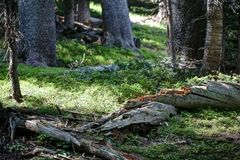 Fallen log in meadow Stock Image