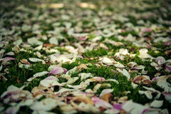 Fallen Magnolia Leaves Royalty Free Stock Image