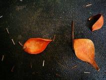 Fallen magnolia pedal lying on wet ground Stock Image