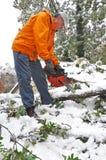 fallen mantree för chainsaw cutting royaltyfri foto