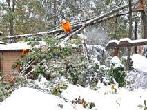 fallen mantree för chainsaw cutting royaltyfri fotografi