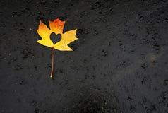 Heart inside of maple leaf on black stock image