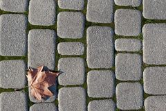 Fallen Maple Leaf. A maple leaf lying on a stone paved path Royalty Free Stock Image