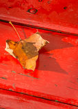 Fallen maple leaf on a red bench. Fallen golden-brown maple leaf on a red bench Stock Photography