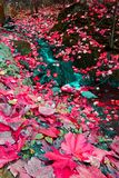 Fallen maple leaves in a flowing creek Stock Photography