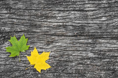 Fallen maple leaves on old wooden table. Autumn background. Vintage concept. Stock Photo