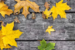 Fallen maple leaves on old wooden table. Autumn background. Vintage concept. Royalty Free Stock Photo