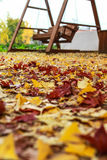 Fallen maple leaves on the path of the autumn park Stock Photo