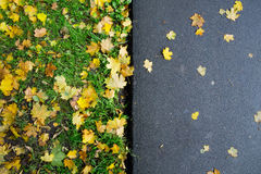 Fallen Maple Leaves on Sidewalk. In autumn Royalty Free Stock Images