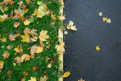 Fallen Maple Leaves on Sidewalk. In autumn Royalty Free Stock Photos